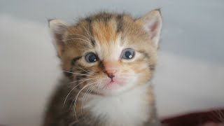 Four Little Warriors Playtime | Newborn Kittens Raised By Human