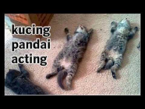 Kucing pandai acting... pura-pura pingsan minta jatah.