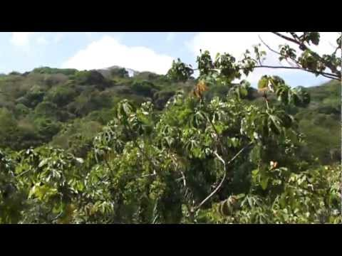 Panama's Tropical Rainforest Aerial Tram