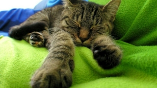 Cat's best #4   Подборка приколов с котами