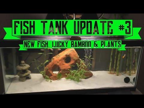 Fish Aquarium Update #1: My 20 Gallon Long Aqueon Tank ...   Doovi
