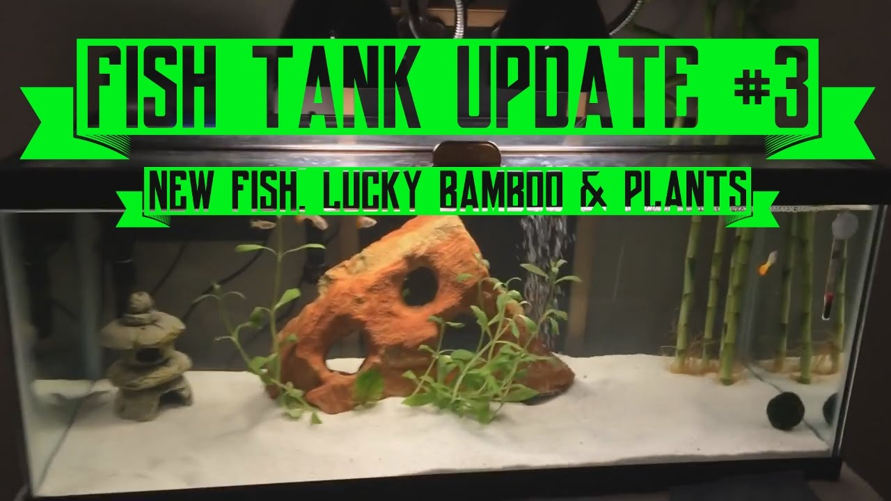 Fish Aquarium Update 3 New Lucky Bamboo Water Primrose Plant
