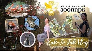 Смотреть видео Куда сходить в Москве | Московский Зоопарк вечером | Плюсы и минусы онлайн
