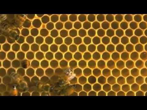 Έχουν εγκαίνια στις κερήθρες - They are building new honeycombs ... 5ae2e062a4f