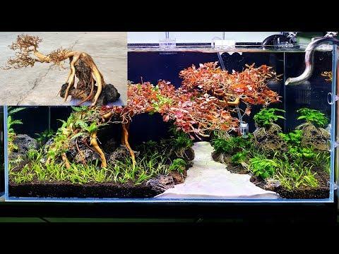 How To Make A Bonsai for Aquarium -  Aquascape