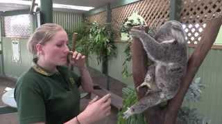 Featherdale Wildlife Park - Sydney Australia, Koalas, Kangaroos Road Trip