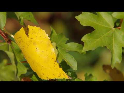 Wenn die Wilden Winde stürmen - Herbstlied