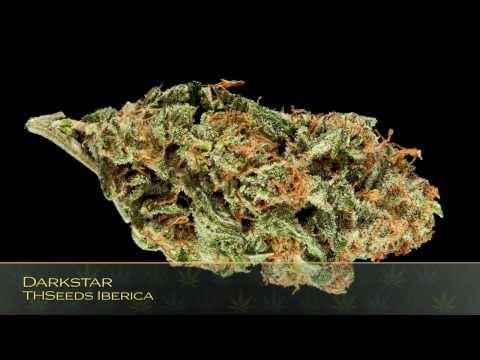 26th Annual HIGH TIMES Cannabis Cup Strain Entries: Seed Company Indica