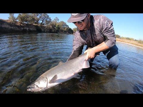 American River Salmon Fishing