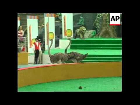 CHINA: SHANGHAI: ANIMAL OLYMPICS