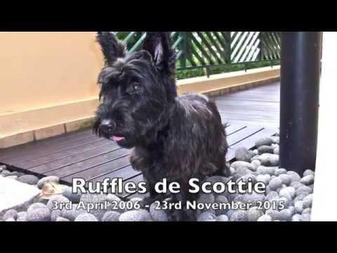 Ruffles - protector, adventurer & companion.