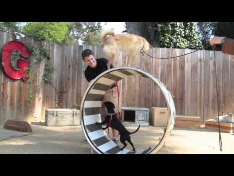 Canine Circus School: Berkeley Trick Dog Training, Bay Area Dog Training