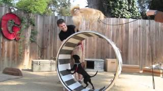 Canine Circus School: Berkeley Trick Dog Training, Bay Area Dog Training