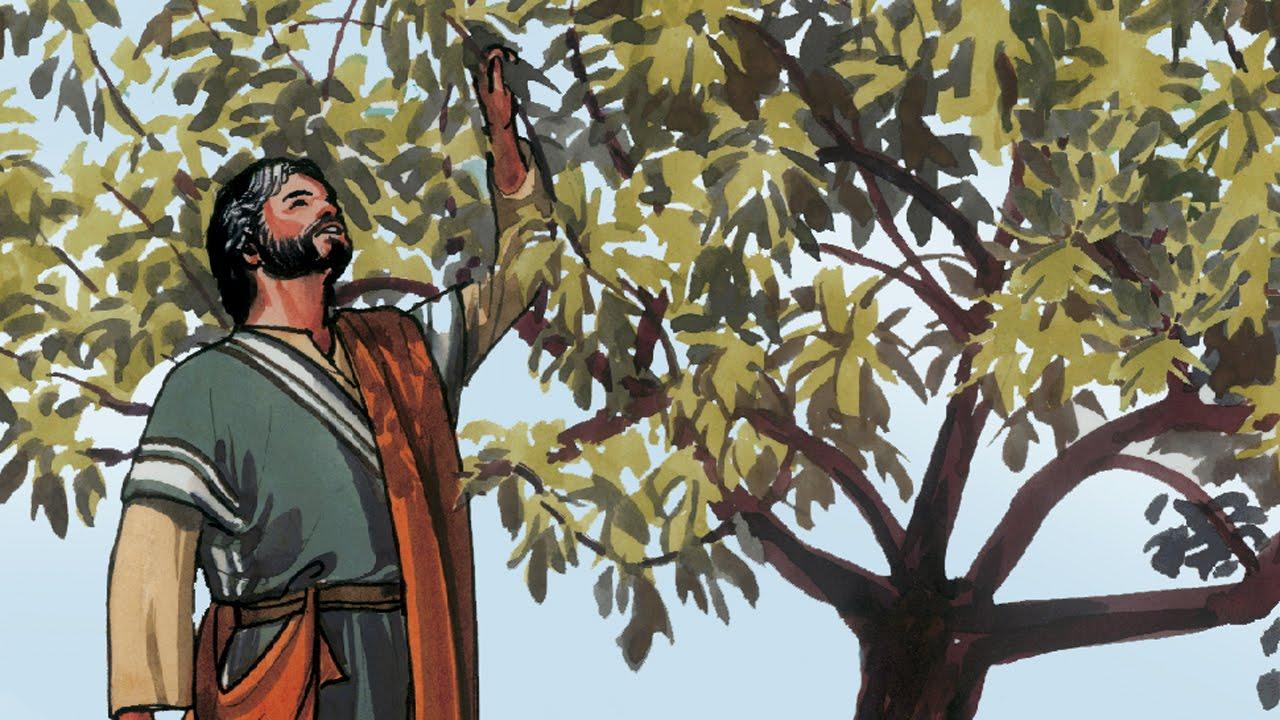 Fig Tree Jesus