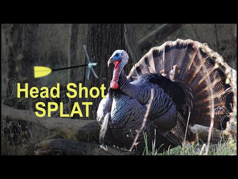 HEAD SHOT, Gobbler Bowhunter