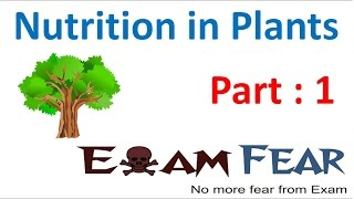 Biology Nutrition in Plants Part 1 (Introduction) Class 7 VII