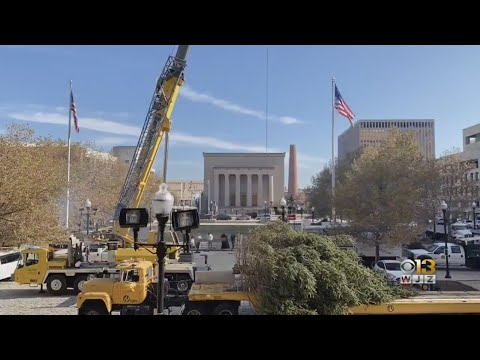 Holiday Tree Arrives In Baltimore