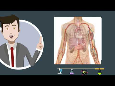 How to remember the 11 Major Organ Systems
