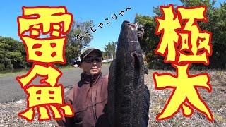 巨大雷魚大繁殖地帯へ極秘遠征。1メートルを超えるモンスターライギョに興奮。任せろ俺が仕留めて魅せる。snake head fishing in Japan