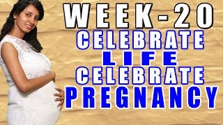 Pregnancy Information Week - 20 (CLCP) Thumbnail