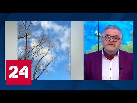 """""""Погода 24"""": в Европейскую Россию неожиданно пришел апрель - Россия 24"""