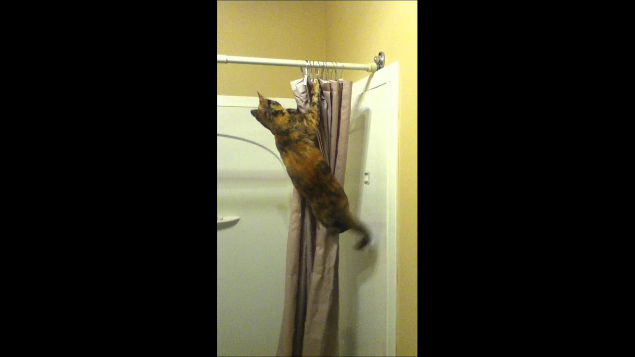Cat Climbing Shower Curtain - YouTube