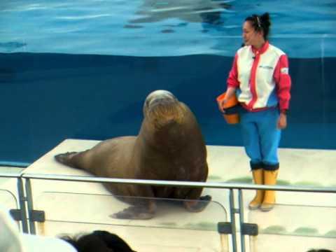 show no aquário de Yokohama