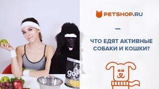 ОБЗОР КОРМОВ GO! - самых популярных холистик-кормов в России