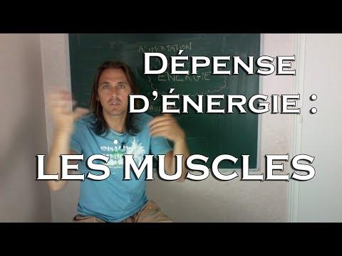 hqdefault - Dépense d'énergie du travail musculaire