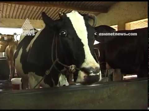 Milma to hike milk price  for diary farmers