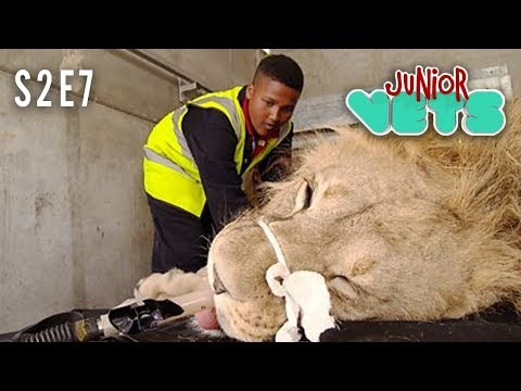 Junior Vets   S2E7