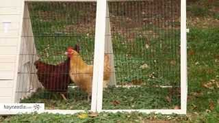 Boomer & George White Wash Dual-use Rabbit Hutch Chicken Coop - Product Review Video