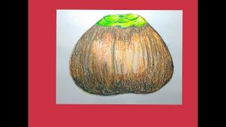 How to draw a palm fruit for kids