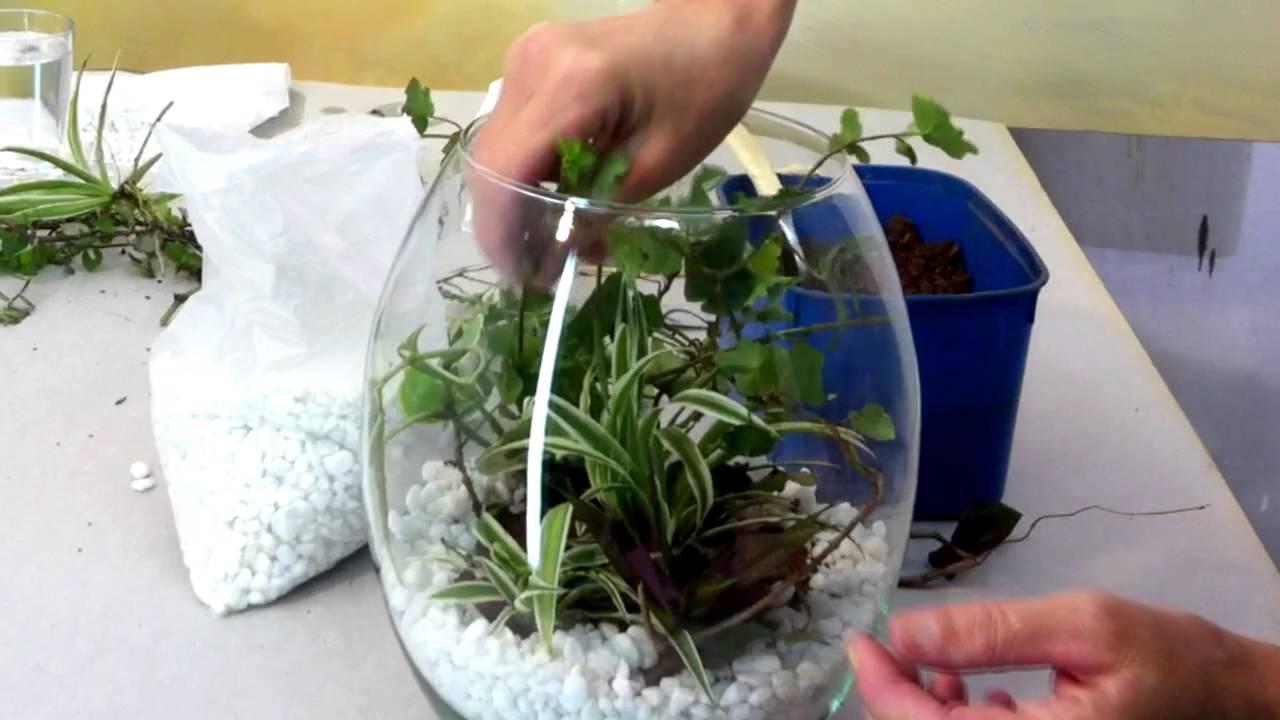Como fazer um terrarium ( mini jardim) em vidro  YouTube