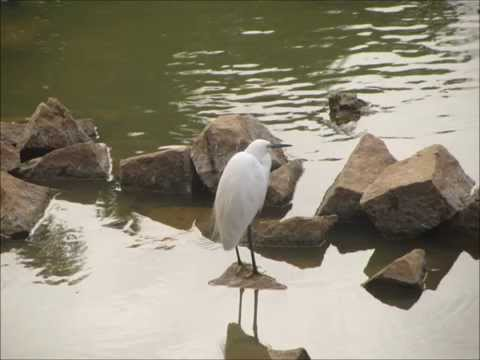 Must visit place in Bangalore city tour...! Lal Bagh Botanical garden..!