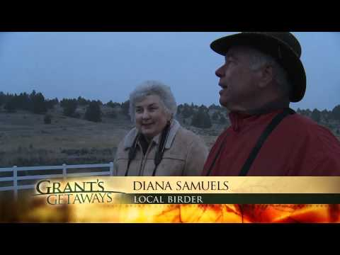 Grant's Getaways: Klamath Basin Bald Eagles