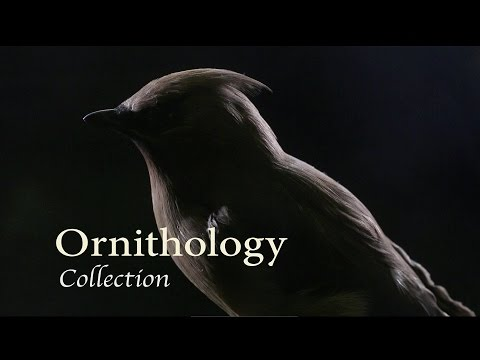 Illinois State Museum: Ornithology Collection