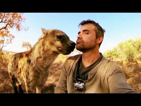 Cet homme est le meilleur ami d'une hyène (Kevin Richardson) - ZAPPING SAUVAGE