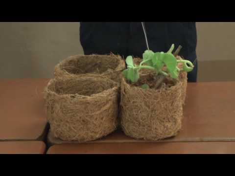 6037 Coir Pot and Paper making
