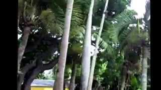 Fairchild Botanical Gardens Miami Florida is in Coral Gables. We to...