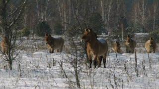 بالفيديو.. آثار أسوأ كارثة نووية في العالم تتحول إلى مرتع للحيوانات البرية
