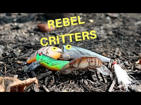 The Rebel Classic Critter Fishing Challenge!!! - Caught A Striped Bass
