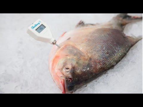 Curso Técnicas de Processamento de Peixes - Conservação pelo Frio