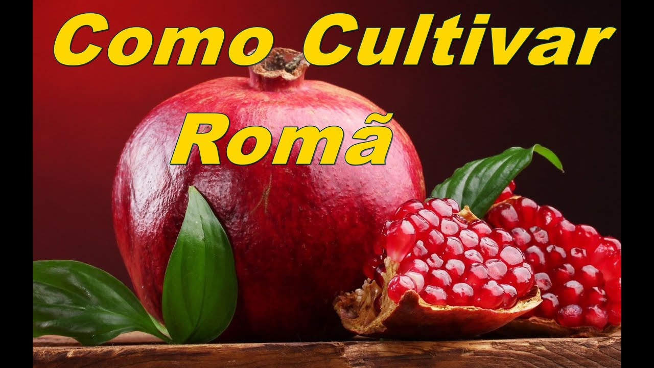 Mondini plantas como cultivar rom youtube for Como cultivar plantas ornamentales