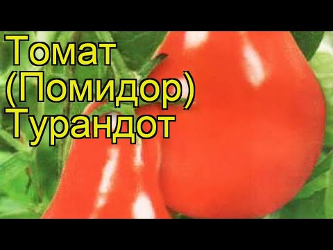 Томат обыкновенный Турандот. Краткий обзор, описание характеристик, где купить саженцы, семена