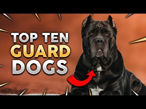 TOP 10 GUARD DOG BREEDS IN THE WORLD!
