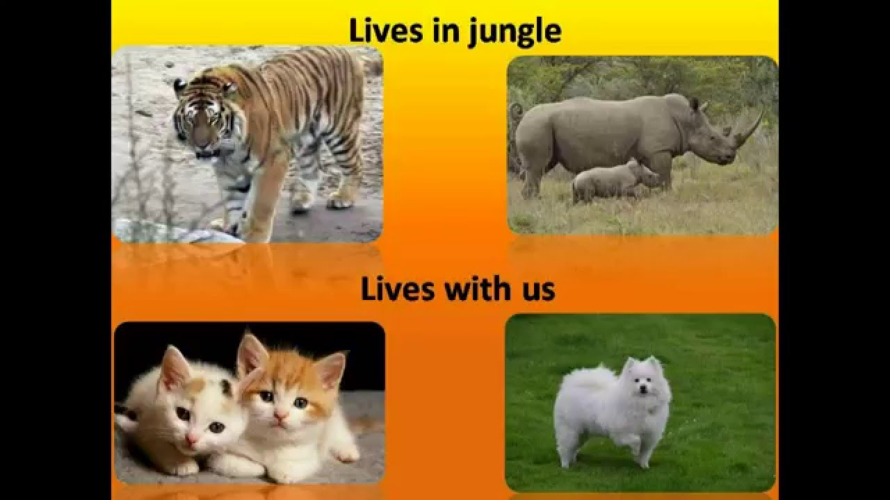 cbse science different types of animals in english youtube