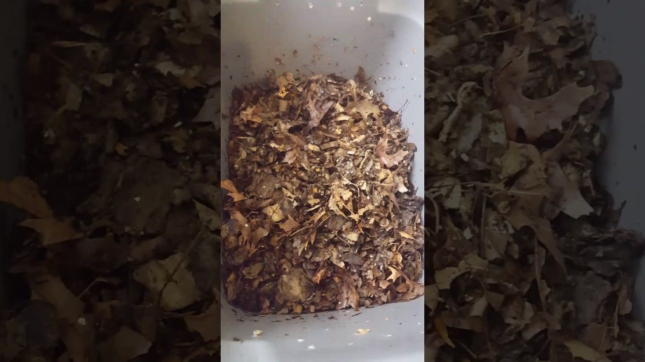 Uncle Jim S Worm Farm Unboxing 1000 Red Wigglers