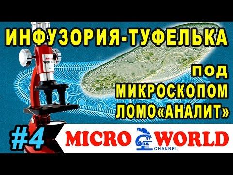 Инфузория-туфелька под микроскопом АНАЛИТ MICRO WORLD #4