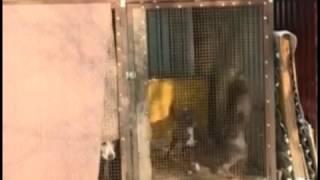 Приют для бездомных собак появится в Кисловодске